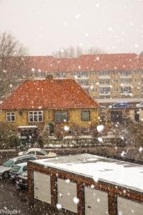 SnowSpring-2