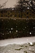 SnowSpring-4